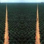 palmoelplantage7